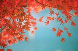 Herbstblätter vor hellblauem Himmel zur Inspiration